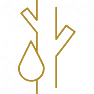Icon Angiologie
