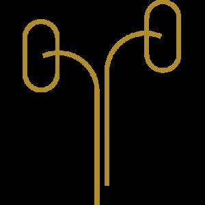 Icon Nephrologie