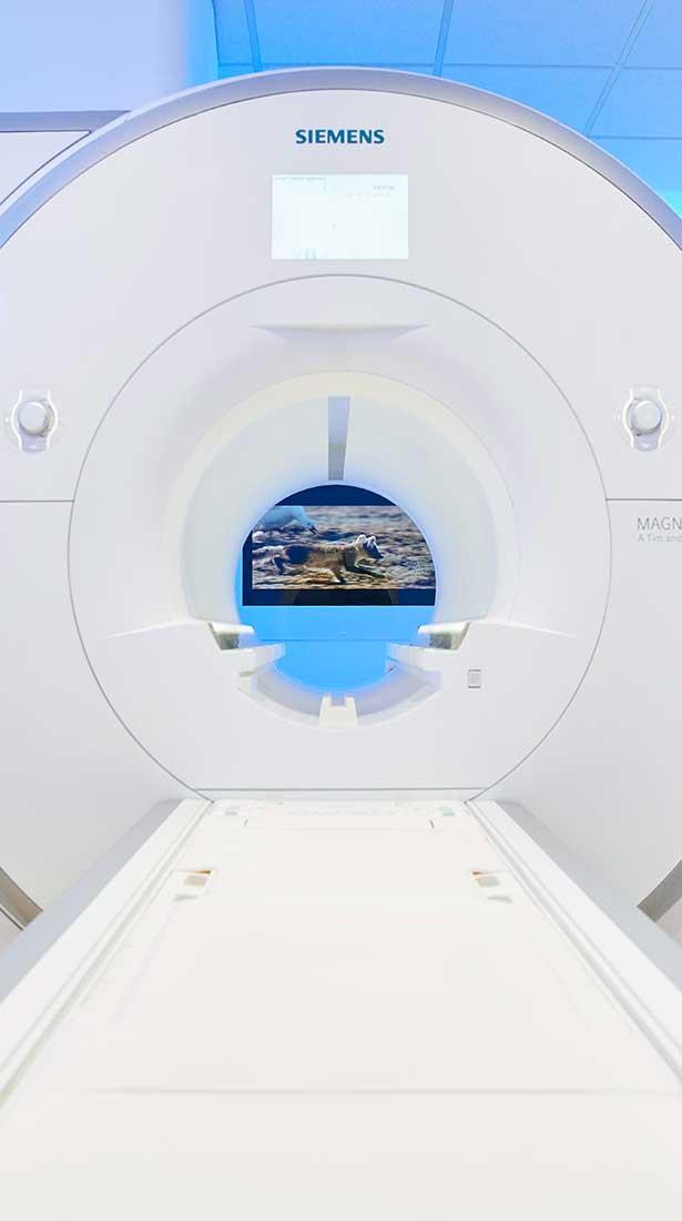 Einblicke in den MAGNETOM Skyra der Max Grundig Klinik